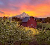 Mỹ: Đất nông nghiệp trở thành kênh đầu tư hấp dẫn